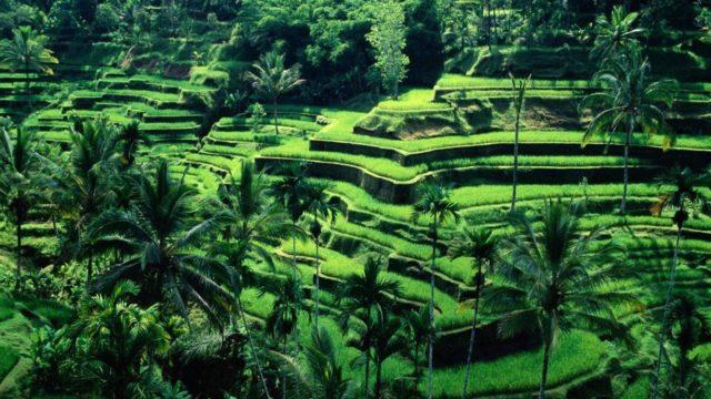 Endonezya Kargo Gönderimi | Kapıdan Kapıya Hızlı Teslimat