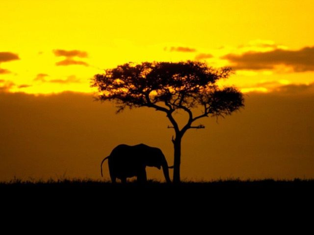 Güney Afrika kargo