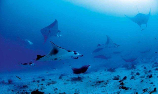 Maldivler kargo