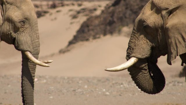 Namibya kargo