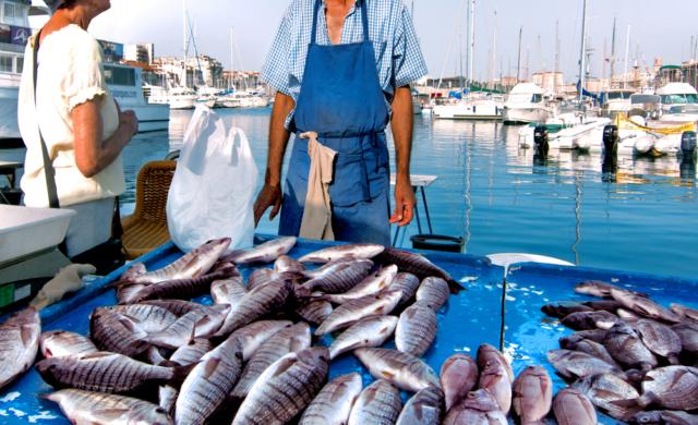 Balık İhracatı